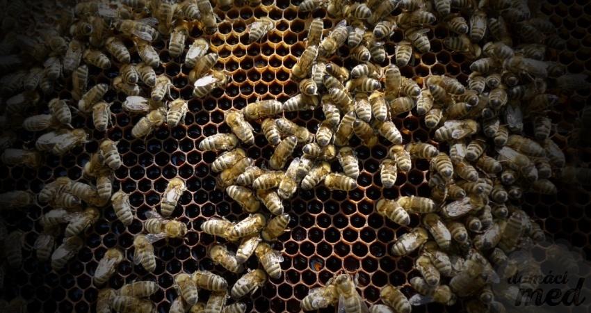 Strach ze včel