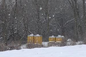 Včely v zimě