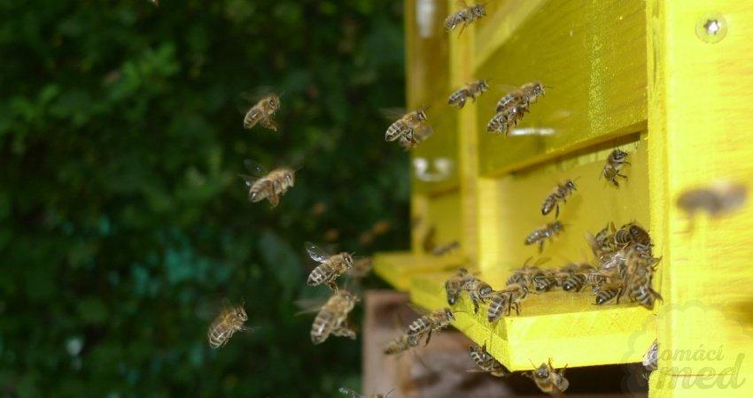 Dělnice přilétají k úlu