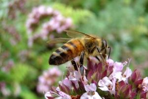 Hymetský med