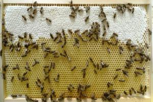 Plástový med