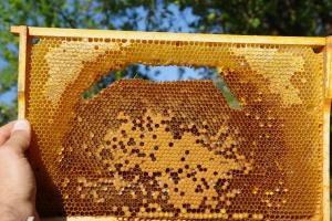 Podpořte celonárodní otestování včelstev na virové infekce