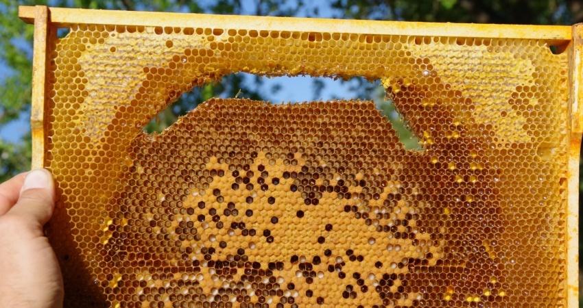 Plást se včelím plodem