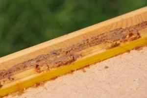 Okraj nástavku zatmelený propolisem