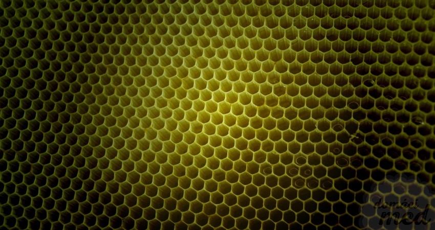 Trypofobie - včelí plást