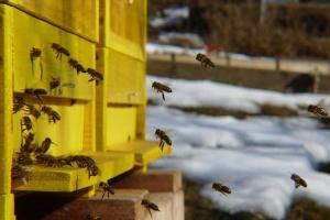 Březen na včelnici