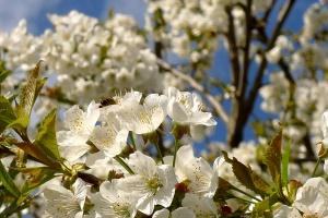 Květen na včelnici