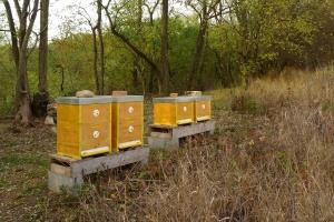 Říjen na včelnici