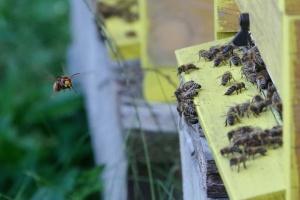 Září na včelnici