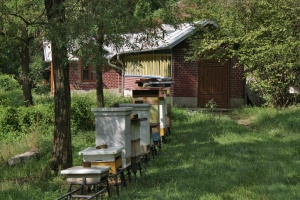 Mendelův včelín