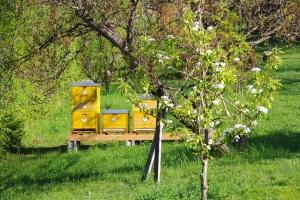 Včely a sousedské vztahy