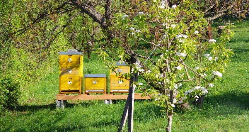 včelí úly umístěné v sadu